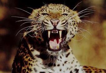 Tanzania Safaris, kenya beach safaris, kenya rock safaris, tours safaris, kenya tours, safaris travel, kenya travel